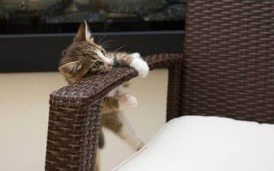 ¿Debería permitir mascotas en mi vivienda en alquiler?